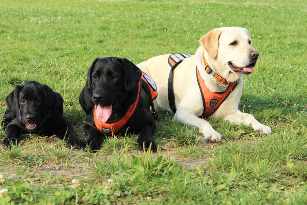 three_dogs